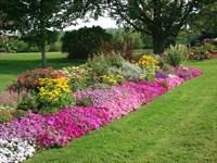 Цветочные и ландшафтные растения