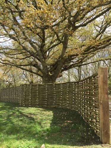 Забор (плетень) из орешника 200х150 см
