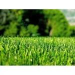 Семена травы газонной Универсал 10 кг.